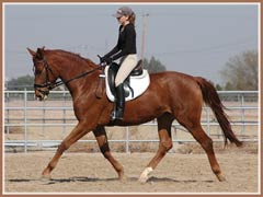 Madira, ridden by Kailee Surplus, January 2008