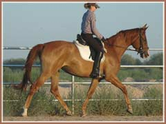 Madira, ridden by Kailee Surplus, August 2007