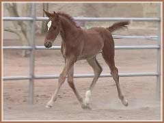 Beautiful trot!